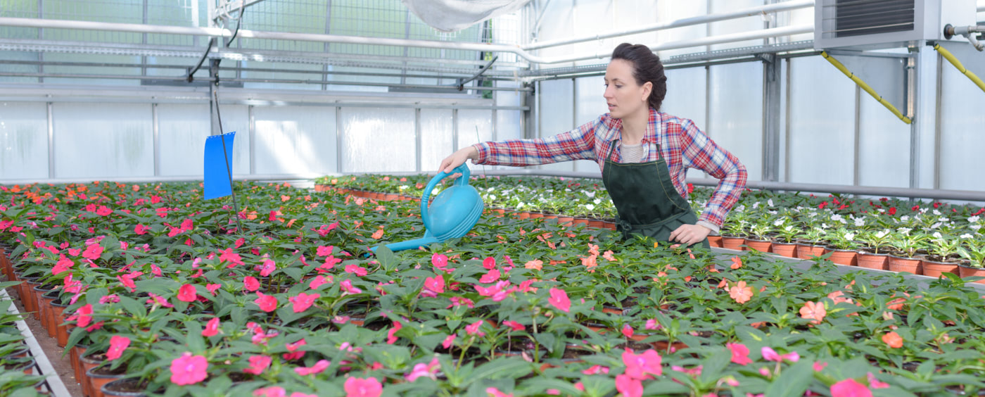 žena ve skleníku ošetřuje květiny